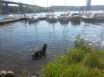 Badhund vid Liljeholmsbron